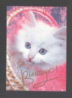 Belarus 2000. Postcard. Birthday Greetings Fauna Cat Pets - Weißrussland