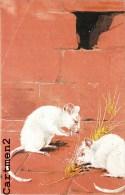 BELLE CPA : SOURIS BLANCHE MOUSE ANIMAUX FANTAISIE ILLUSTRATEUR - Animales