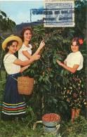 Lote PEP877, Colombia, Postal, Postcard, Tarjeta Maxima, Maximun Card, Cafe, Mujer, Cofee, Woman, 10510 - Colombia