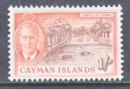 CAYMAN ISLANDS   131   *   TURTLE - Cayman Islands