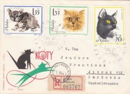 Poland / Cats - Montenegro