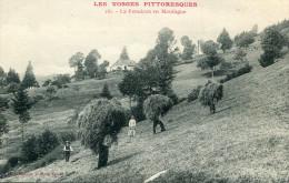 AGRICULTURE(VOSGES) FENAISON - Cultures
