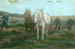 AGRICULTURE(LABOUR) - Cultures