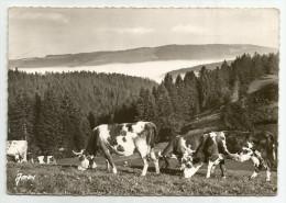 CPM DOUBS  - 25 - Vaches Aux Paturages - Frankrijk