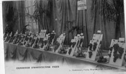 PARIS EXPOSITION D´HORTICULTURE MAISON CROUX ET FILS - Ausstellungen