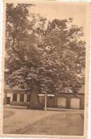 Zoersel - De Lindeboom - Zoersel