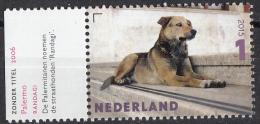 """Nederland - Charlotte Dumas - Zonder Titel, 2006 - Straathond/""""Randagi"""" - MNH - NVPH 3337 - Honden"""