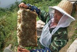 [ T25-015 ]  Insect Bee Honeybees Beekeeping  , China Pre-stamped Card, Postal Stationery - Honeybees