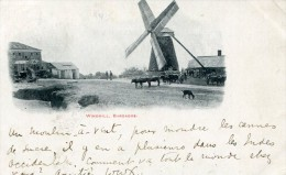 POST CARD WINDMILL BARBADOS 1905 - Barbades
