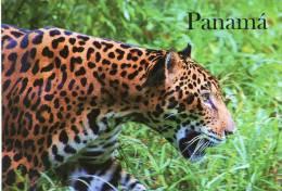 Lote PEP902, Panama, Postal, Postcard, Fauna, Jaguar, 2, Endargered Species - Panama