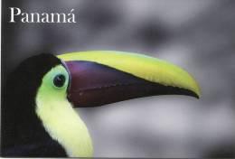 Lote PEP905, Panama, Postal, Postcard, Ave, Bird, Tucan De Swainson, Toucan - Panamá