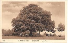 SAINTE MARIE AUX MINES - Le Petit Haut - Le Gros Chêne - France