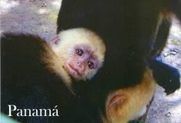 Lote PEP909, Panama, Postal, Postcard, Mono Cariblanco, Monkey - Panamá