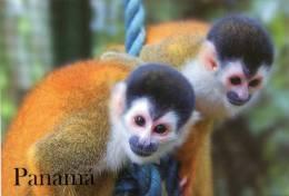 Lote PEP911, Panama, Postal, Postcard, Mono Ardilla, Monkey - Panamá