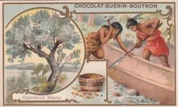 - CHOCOLAT GUERIN - BOUTRON - GOMMIER BLANC - - Guérin-Boutron