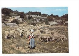 13016 -  Jeune Bergère Et Ses Moutons (Format 10X15) - Animaux & Faune