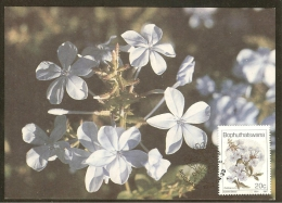 BOPHUTHATSWANA Carte Maximum - Plumbago Auriculata - Bophuthatswana