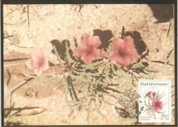 BOPHUTHATSWANA Carte Maximum - Pterodiscus Speciosus - Bophuthatswana