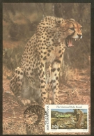BOPHUTHATSWANA Carte Maximum - Guépards Et Touristes - Bophuthatswana
