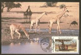 BOPHUTHATSWANA Carte Maximum - Girafes - Bophuthatswana