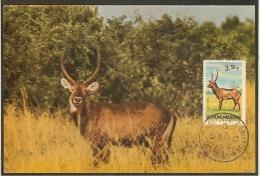 BURUNDI Carte Maximum - Kobus Defassa - Altri