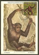 BURUNDI Carte Maximum - Chimpanz - Burundi