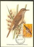 BURUNDI Carte Maximum - Acrocephalus - Altri