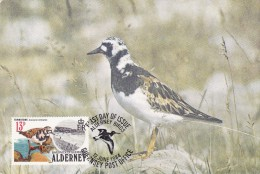 GB.AURIGNY Carte Maximum - Arenaria Interpres - Alderney
