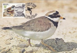 GB.AURIGNY Carte Maximum - Charadrius Hiaticula - Alderney