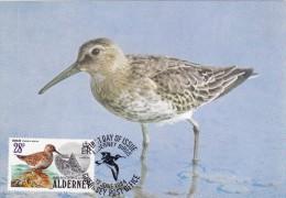GB.AURIGNY Carte Maximum - Calidris Alpina - Alderney