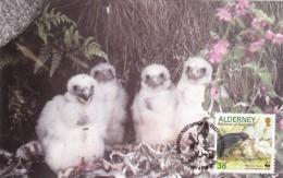 GB.AURIGNY Carte Maximum - Nourrissant Ses Petits - Alderney