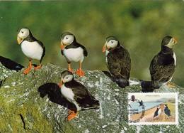 GB.MAN Carte Maximum - Fratercula Arctica - Isle Of Man