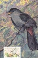 GRENADE GRENADINES Carte Maximum - Dumetella Carolinensis - St.Vincent & Grenadines