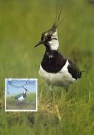 IRLANDE Carte Maximum - Vanellus Vanellus - Cartoline Maximum