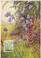 ISLANDE Carte Maximum - Bleuets - Cartoline Maximum