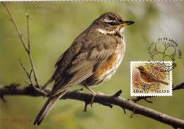 ISLANDE Carte Maximum - Turdus Iliacus - Cartoline Maximum