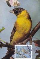JORDANIE Carte Maximum - Emberiza Melanocephala - Jordanie
