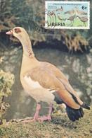 LIBERIA Carte Maximum - Canards, Oiseaux D'Eau - Liberia