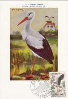 MONACO Carte Maximum - Cigogne Blanche - Maximum Cards
