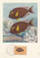 MOZAMBIQUE Carte Maximum - Teuthis Nigrofuscus - Mozambique