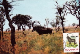 MOZAMBIQUE Carte Maximum - Hippotragus Niger - Mozambique