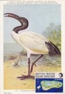 OCEAN INDIEN Carte Maximum - Ibis Sacr - Maximum Cards