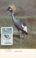 OUGANDA Carte Maximum - Balearica Pavonina - Ouganda (1962-...)