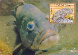 PANAMA Carte Maximum - Mérou - Panama
