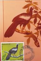 PARAGUAY Carte Maximum - Pipile Cumanensis - Paraguay