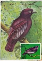 PARAGUAY Carte Maximum - Xipholena Punicea - Paraguay