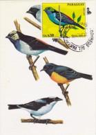 PARAGUAY Carte Maximum - Tangara Chilensis - Paraguay