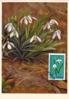 POLOGNE Carte Maximum - Galanthus Nivalis L. - Maximumkarten