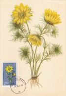POLOGNE Carte Maximum - Adonis Vernalis L. - Maximumkarten
