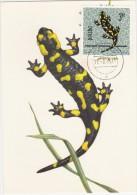 POLOGNE Carte Maximum - Salamandre - Maximumkarten